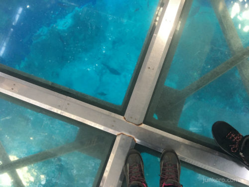 美ら海水族館の黒潮探検 大水槽の真上に立つ