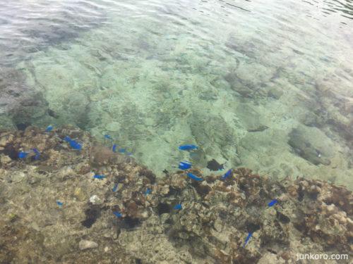 備瀬の海 熱帯魚